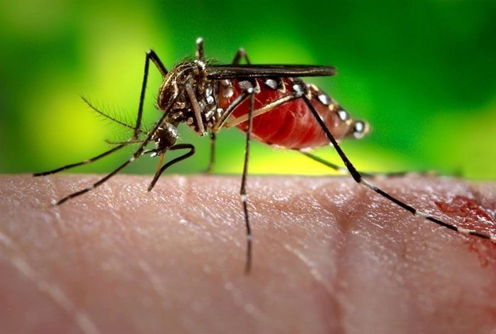 9 things you might not know about mosquitoes
