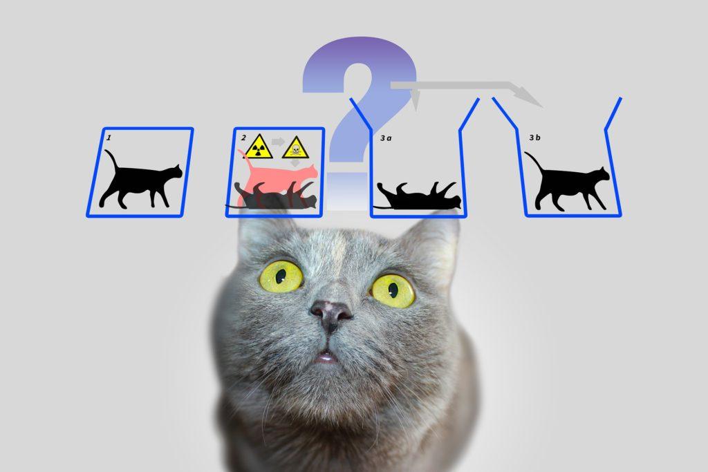 La paradoja del gato de Schrödinger