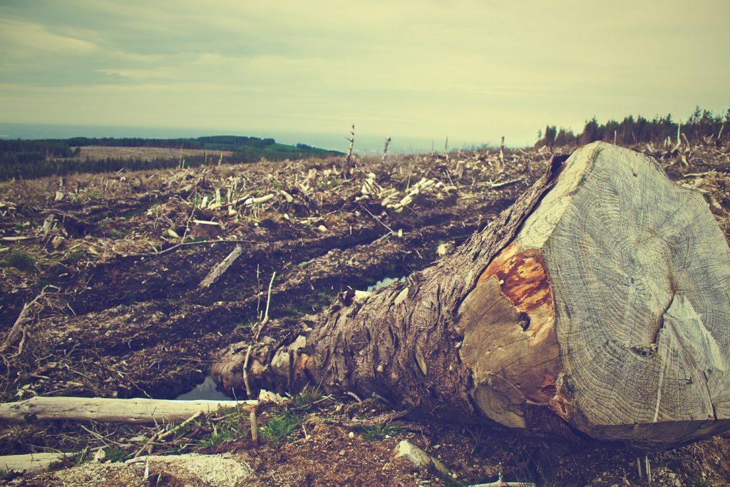 La evolución de la deforestación en los últimos siglos