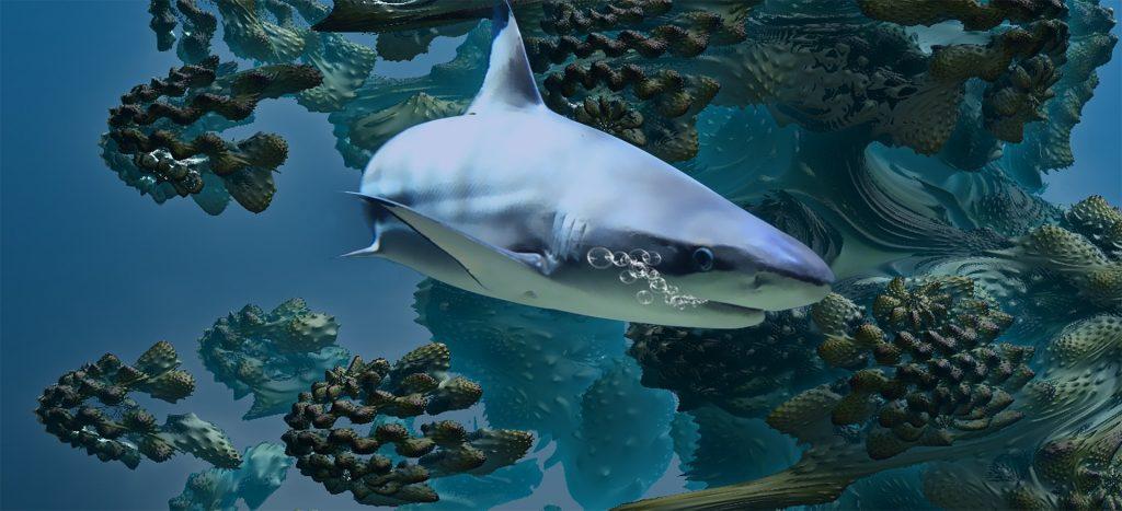 Tiburones: Uno de los animales más antiguos